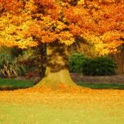 Красивый осенний дуб украсит любой смартфон